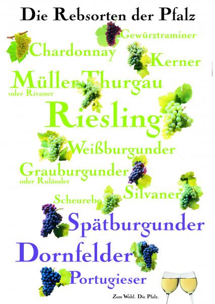 Rebsortenplakat der Pfalz